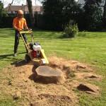 Stump-Grinding-2