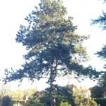 Tree Felling Service 1
