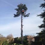 Tree Felling Service 2