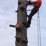 Tree Felling Service 3