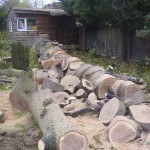 Tree Felling Service 4